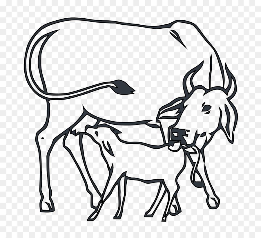 National congress brahman calf. Cattle clipart cow indian