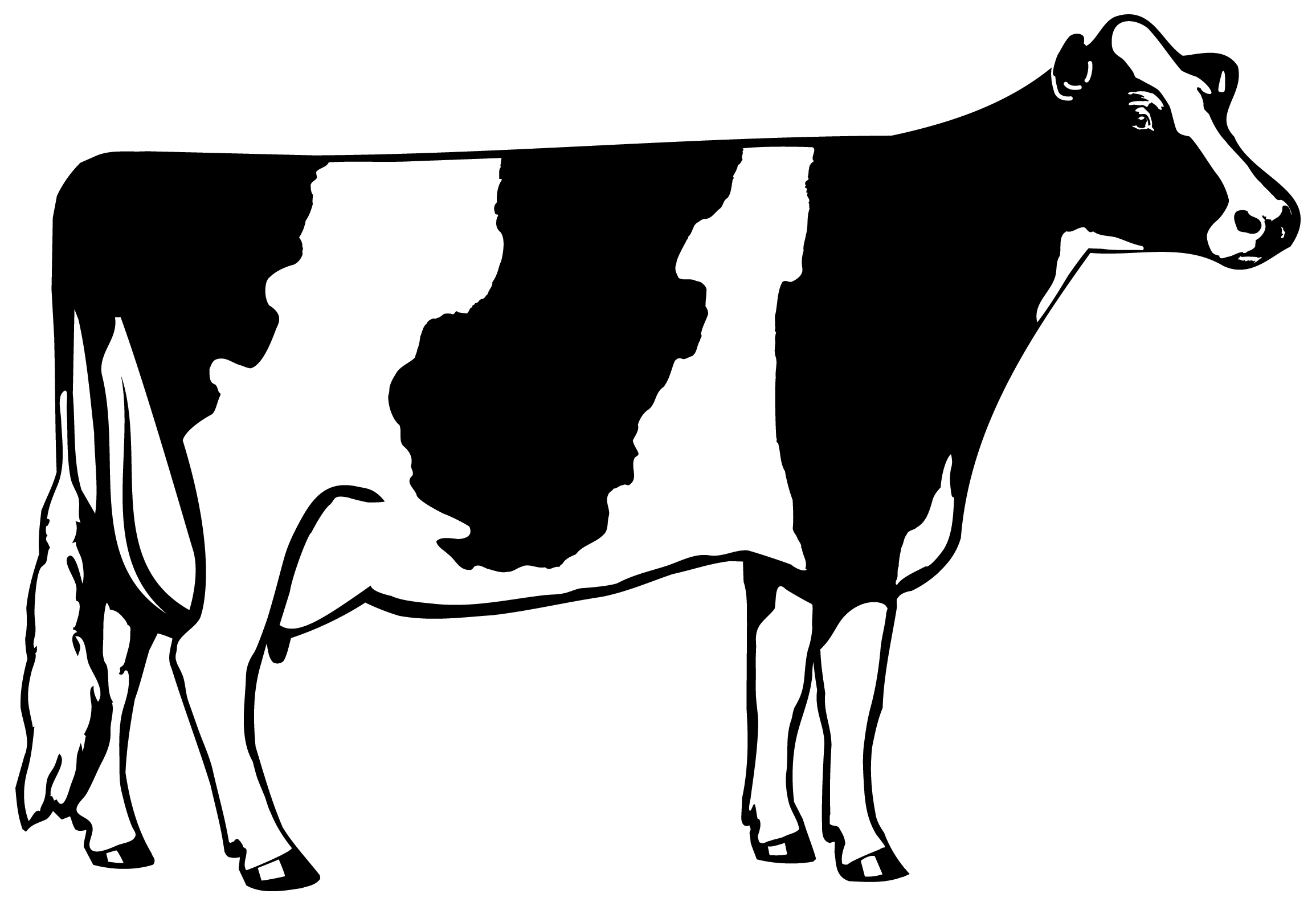 Fresh cow black and. Cattle clipart home