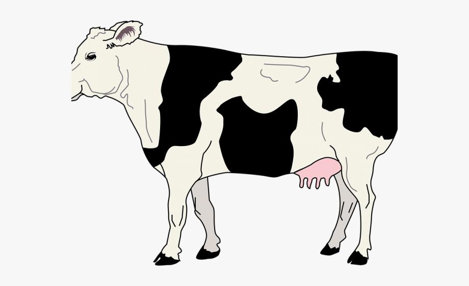 Farm animals cattle side. Cows clipart livestock