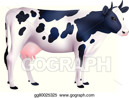 Vector stock cow illustration. Cows clipart realistic