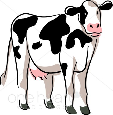 Cows clipart realistic. Drawing of cow coloring