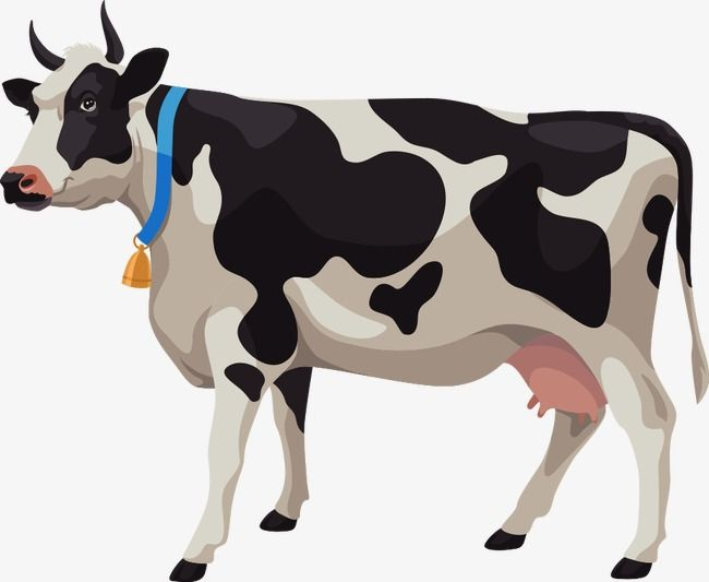Cows clipart vector. Cartoon dairy cow cattle