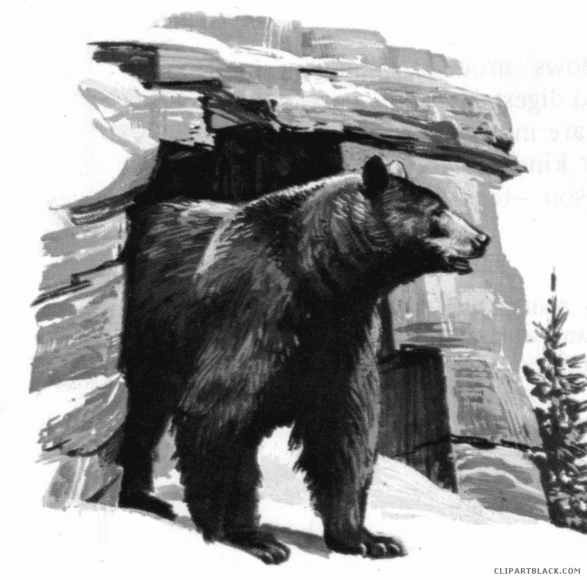 Cave clipart. Bear clipartblack com animal