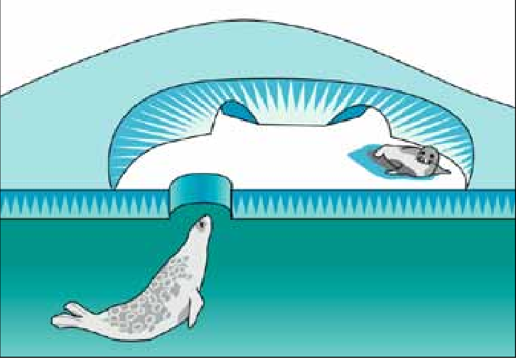 Cave clipart lair. Ringed seals give birth
