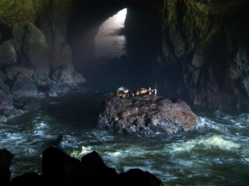 Cave clipart under sea. Lions clipground lion