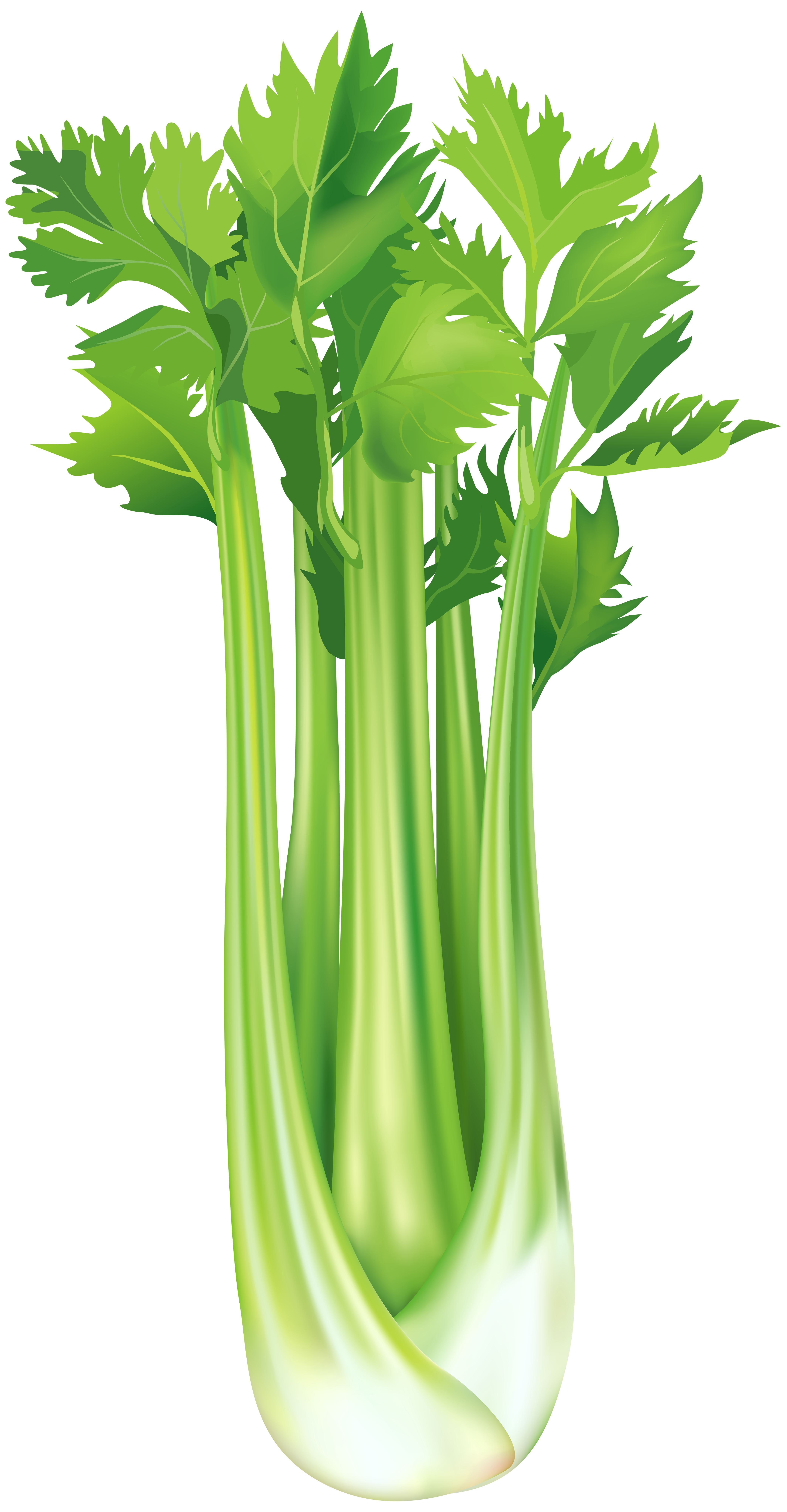 Celery clipart. Free png clip art