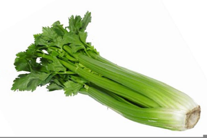 Celery clipart. Stalk free images at