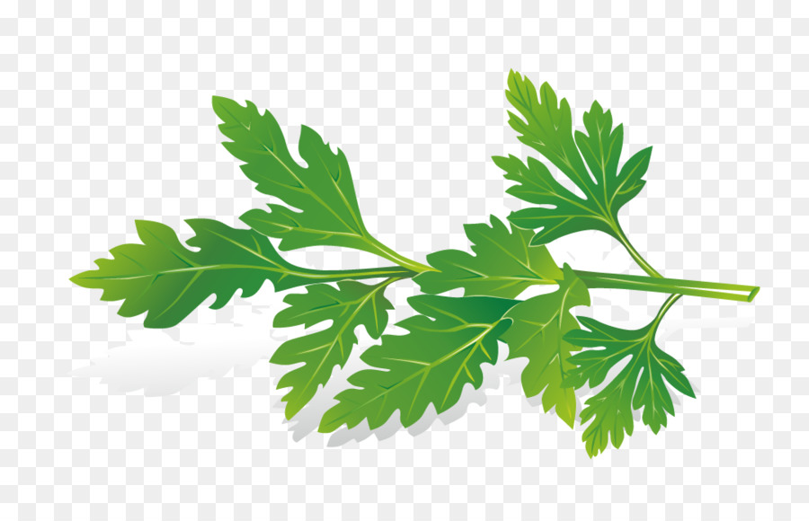 Herb royalty free clip. Celery clipart celery plant