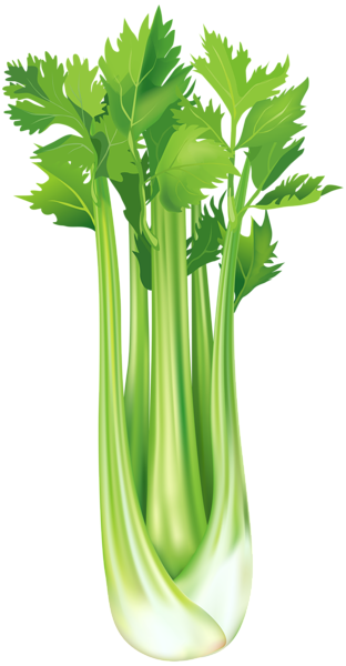 Pin by pink maiden. Celery clipart celery stalk