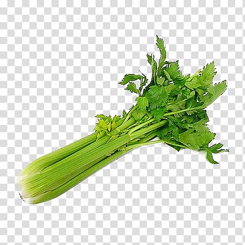 Celery clipart chopped. Wild organic food vegetable