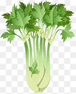 Vector png vectors psd. Celery clipart cute