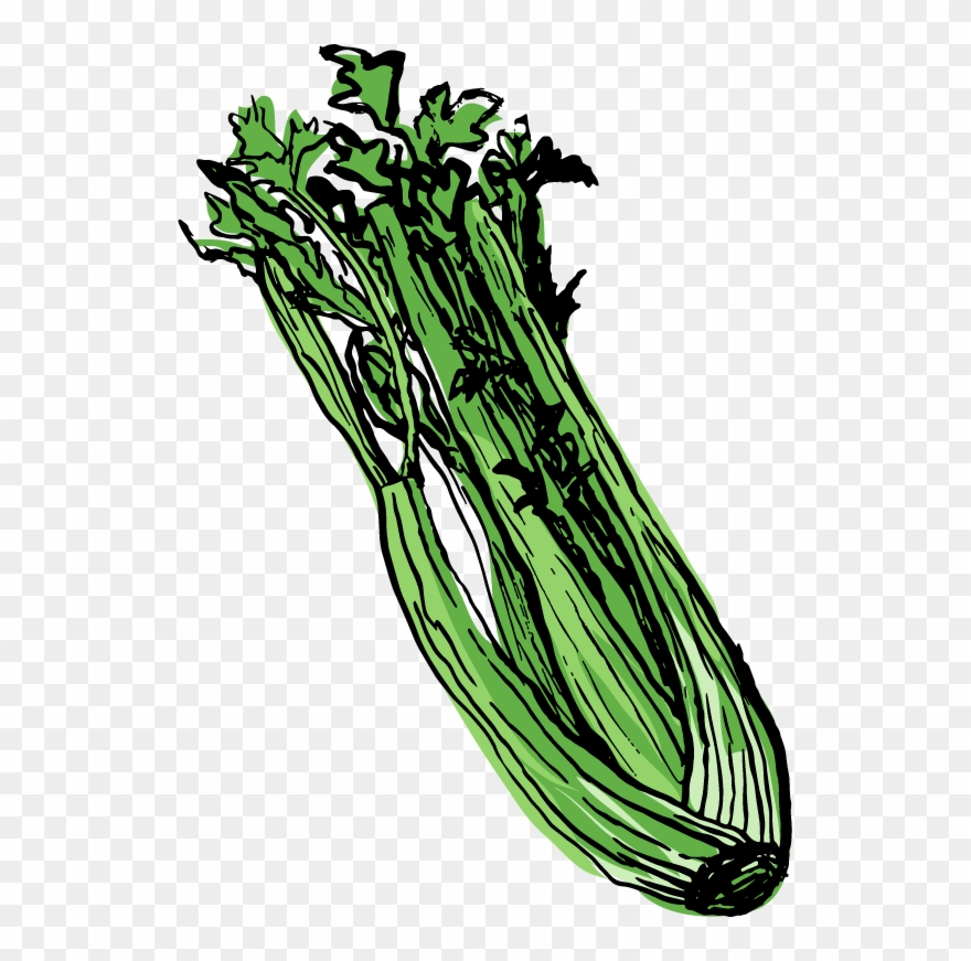 Food pinclipart . Celery clipart drawn
