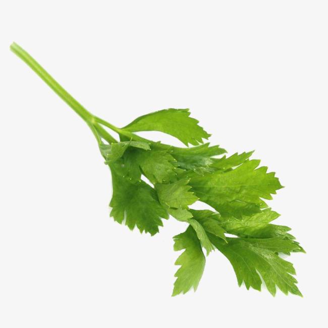 Celery clipart single. Green png vectors psd