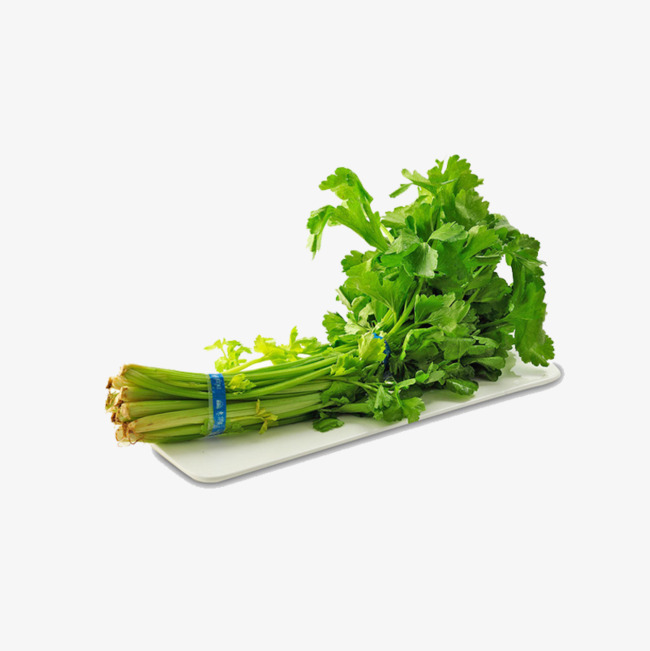 Celery clipart single. A bunch of leaves