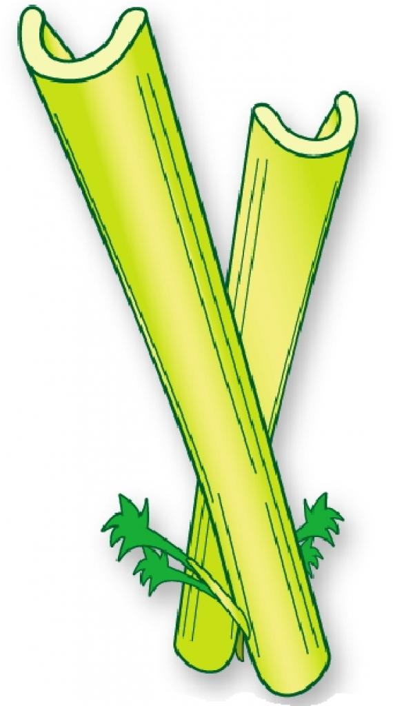 Celery clipart vector. Clip art png photo