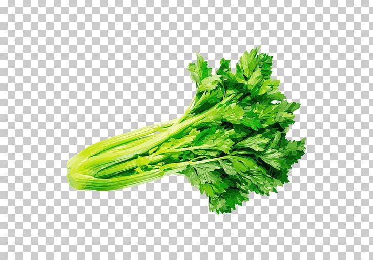 Parsley coriander herb png. Celery clipart vegetable