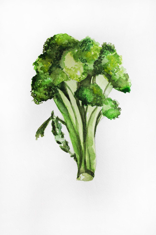 Original painting broccoli art. Celery clipart watercolor