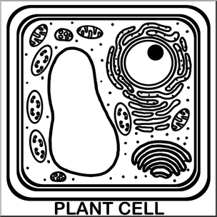 Clip art cells plant. Cell clipart black and white
