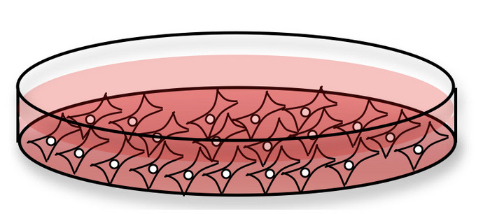 Cells growing in a. Cell clipart cell culture