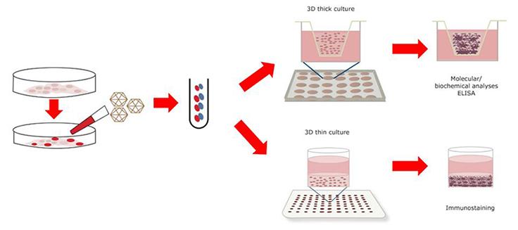 d neural stem. Cell clipart cell culture