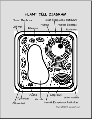 Plant abcteach preview . Cell clipart cell diagram