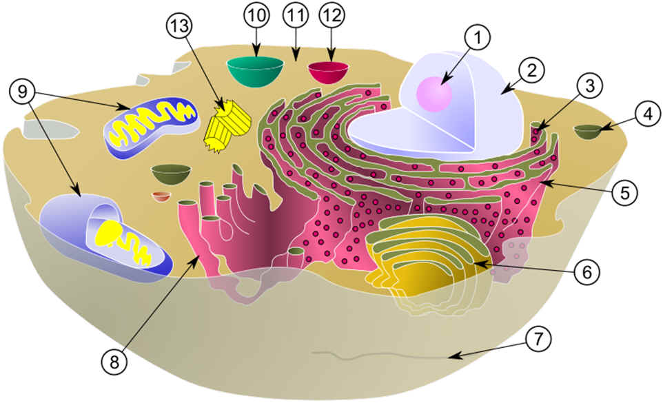 Composite . Cell clipart cell diagram