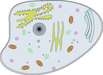 What is biology lesson. Cell clipart cell structure