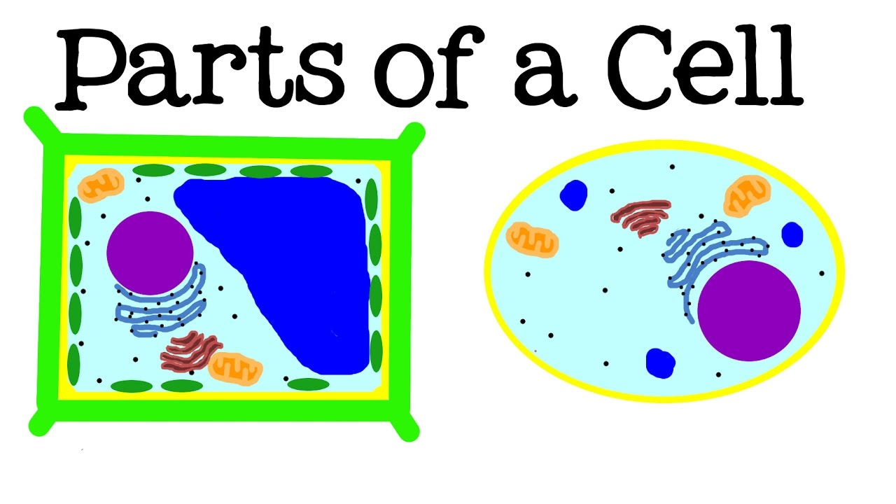 All about cells and. Cell clipart cell structure
