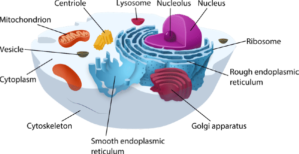 Structures lesson tqa explorer. Cell clipart cell structure