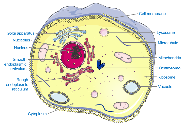 Animal creative commons image. Cell clipart cell theory