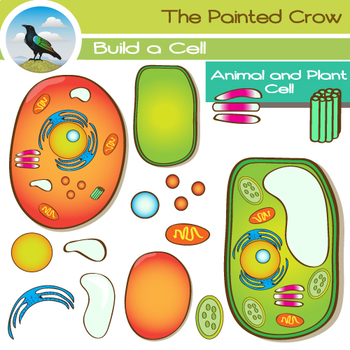 Animal plant clip art. Cell clipart colored