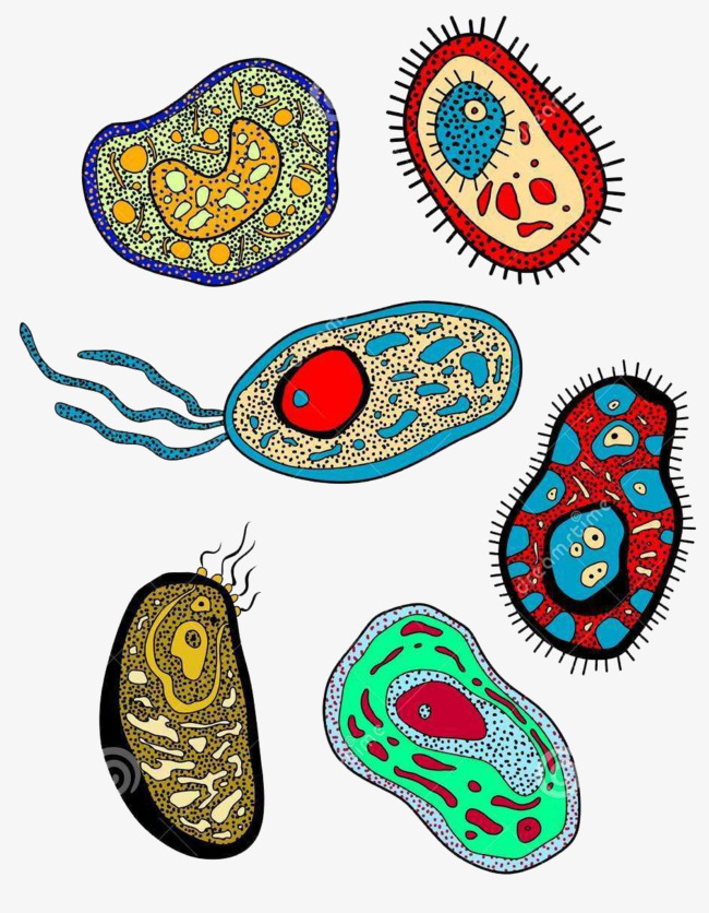 Color biomedical hand drawing. Cell clipart cute