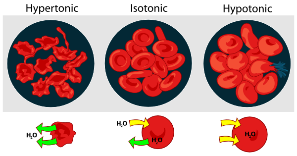 Cell clipart labelled. Osmotic pressure on blood