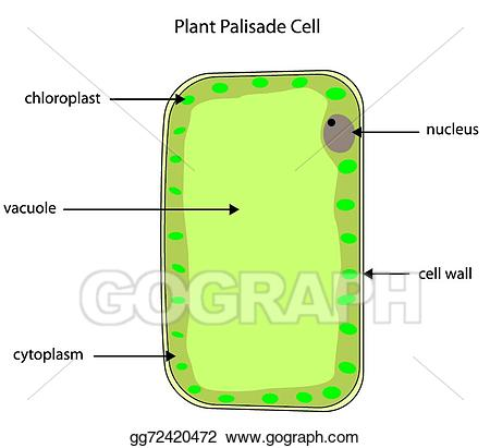 Cell clipart labelled. Eps illustration diagram of