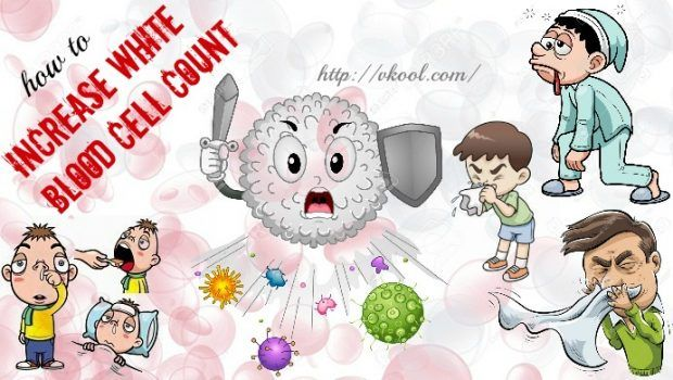 tips on how. Cell clipart leukocyte