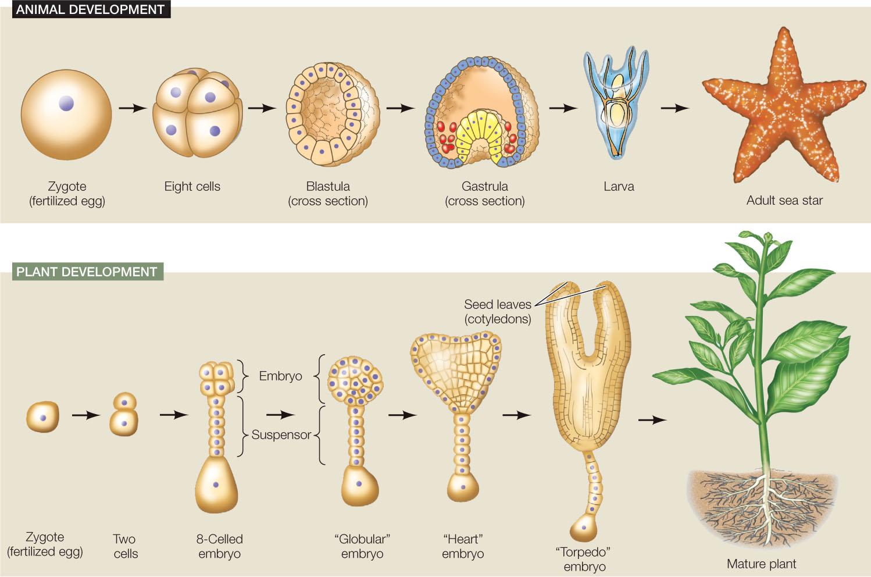 Hillis e ch although. Cell clipart organism
