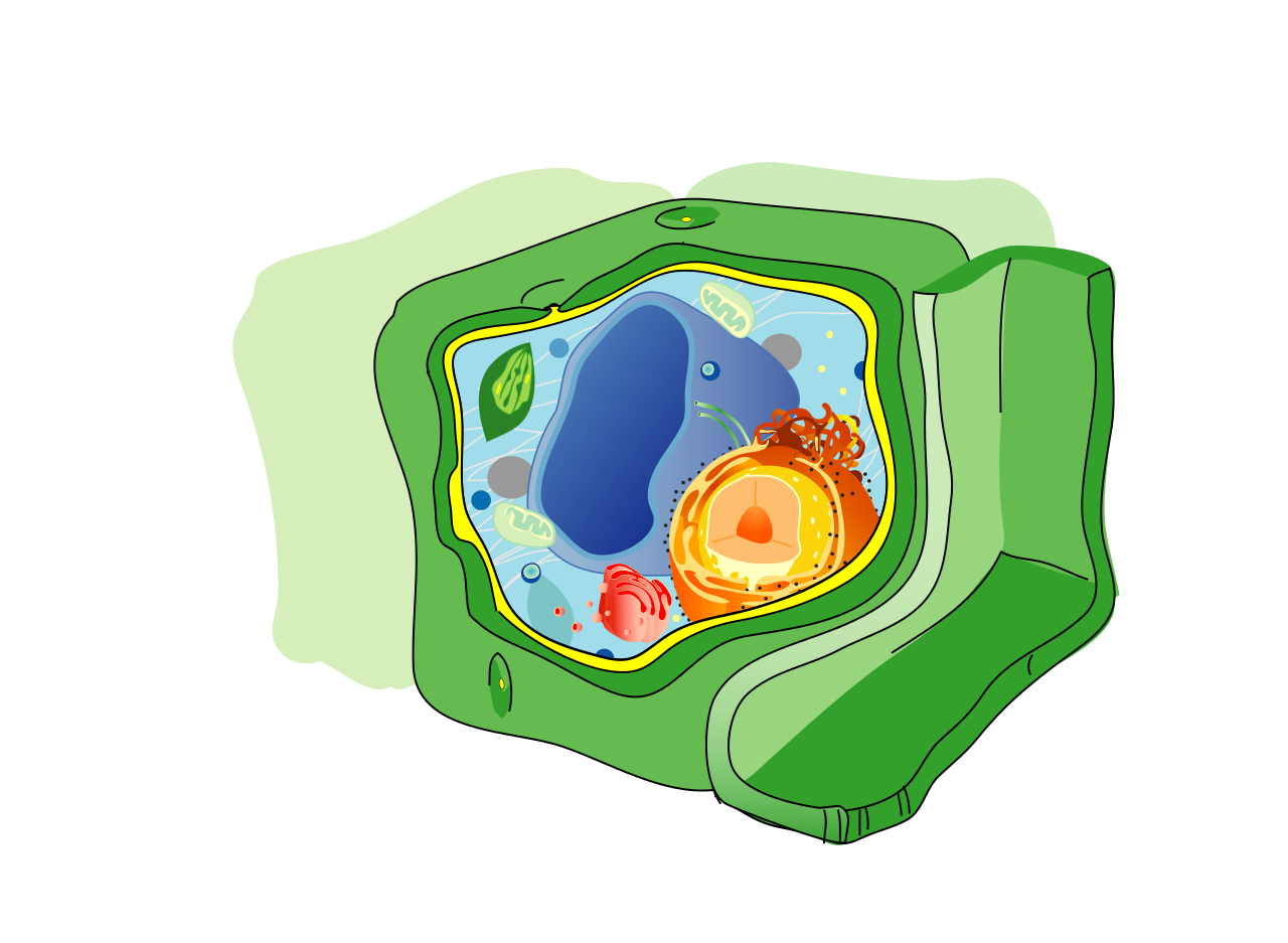 File structure no text. Cell clipart plant cell