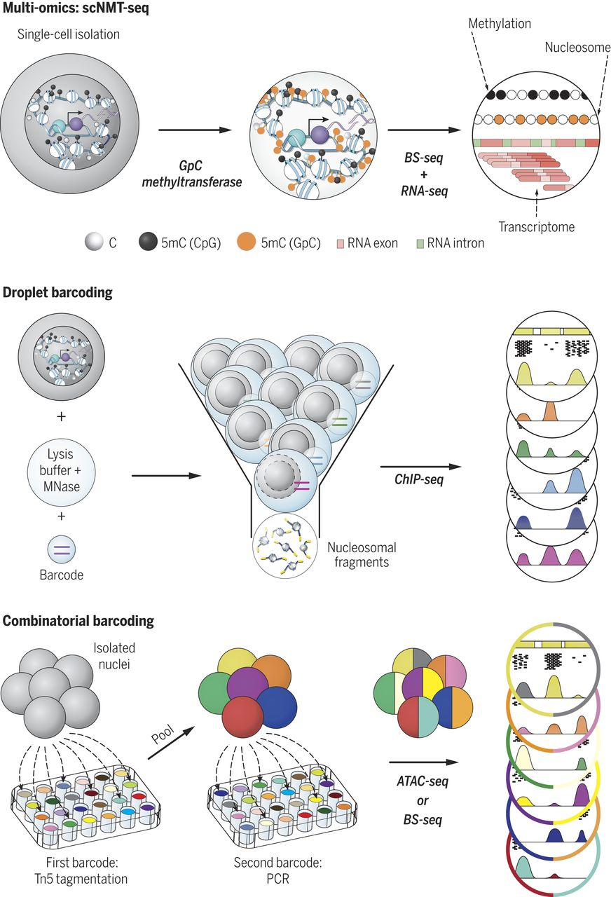 Cell clipart single cell. Epigenomics recording the past