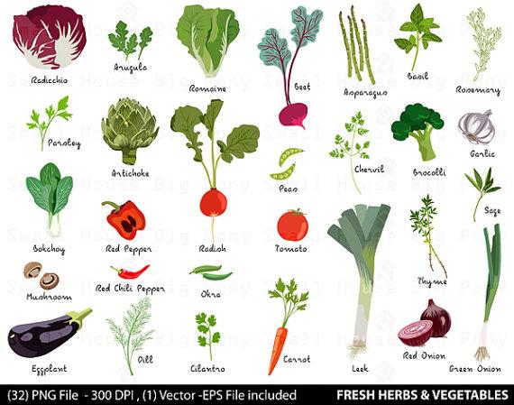 Digital fresh herbs clip. Cell clipart vegetable