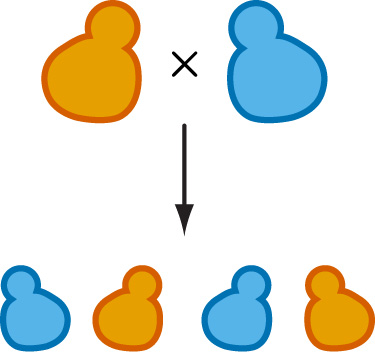 Cells clipart yeast. Research kryazhimskiy lab ucsd