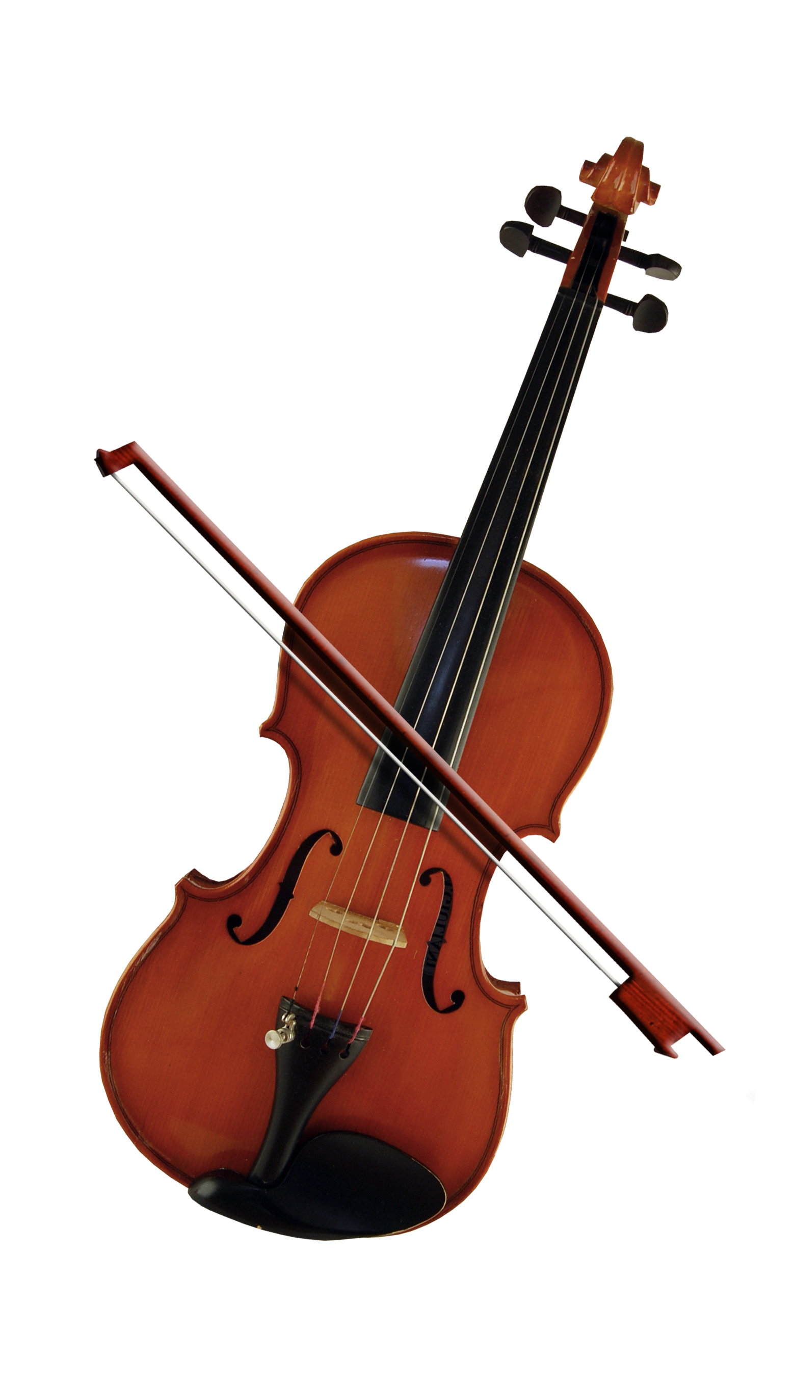 Bass violin violone beautiful. Cello clipart viola