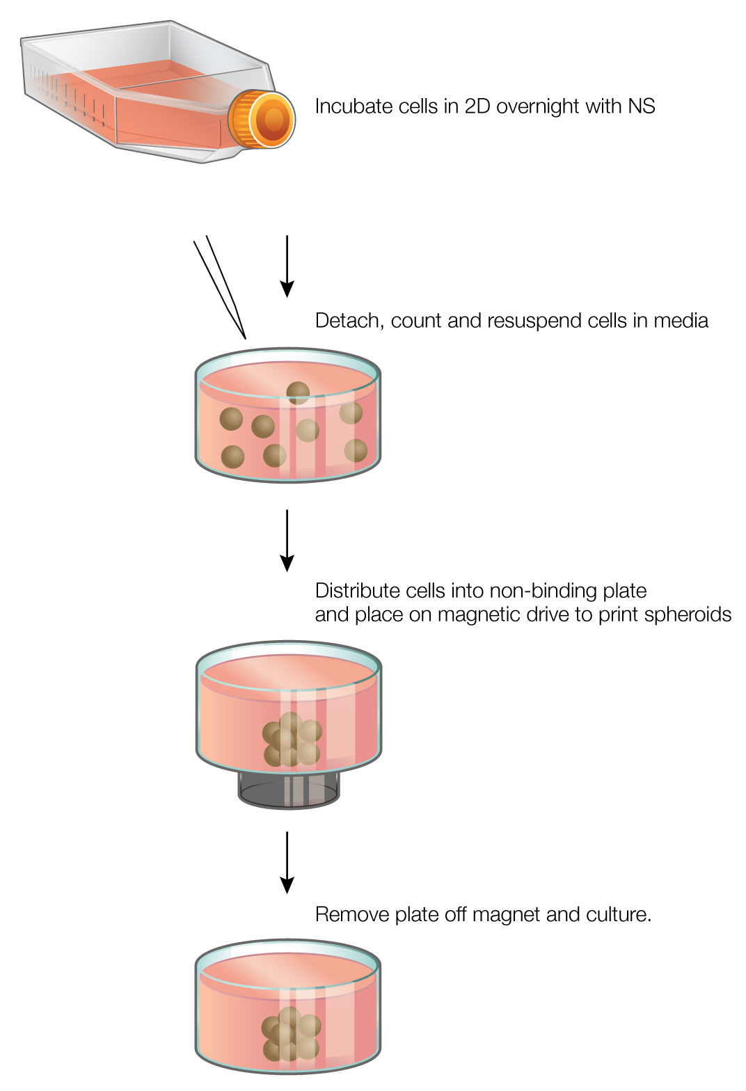 Luminescent viability assays in. Cells clipart cell culture