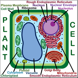 Clip art cells labeled. Cell clipart plant cell