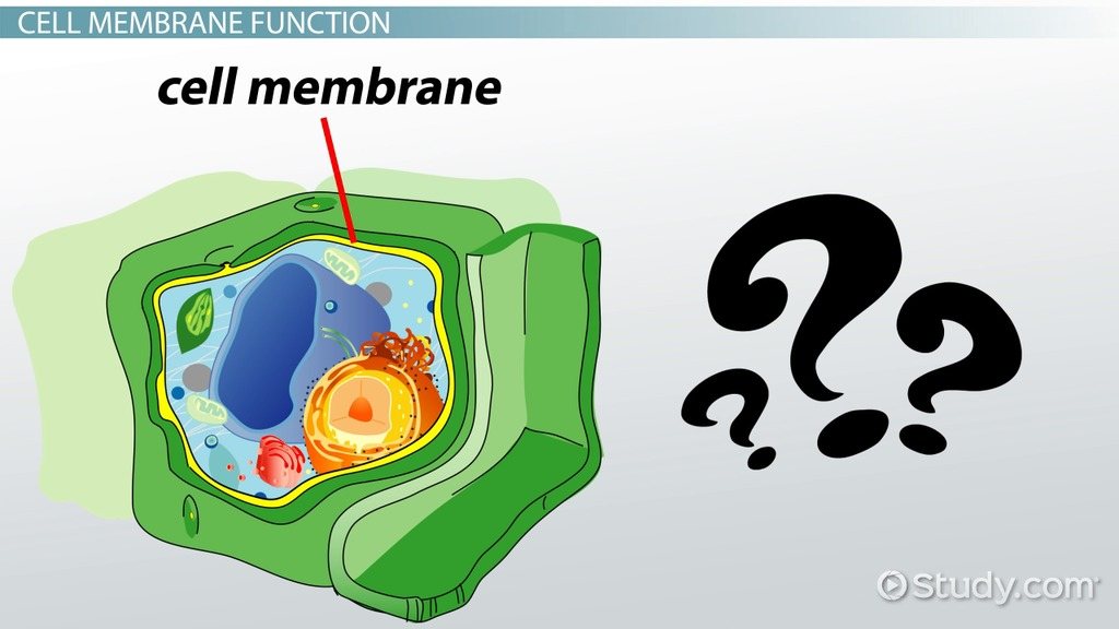 Cells clipart plant cell. Do have a membrane