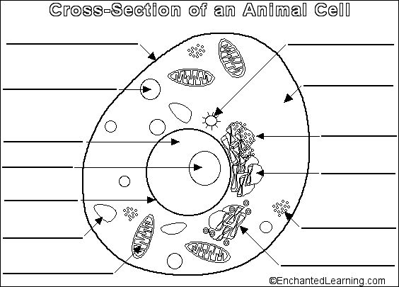 best animal and. Cells clipart printable