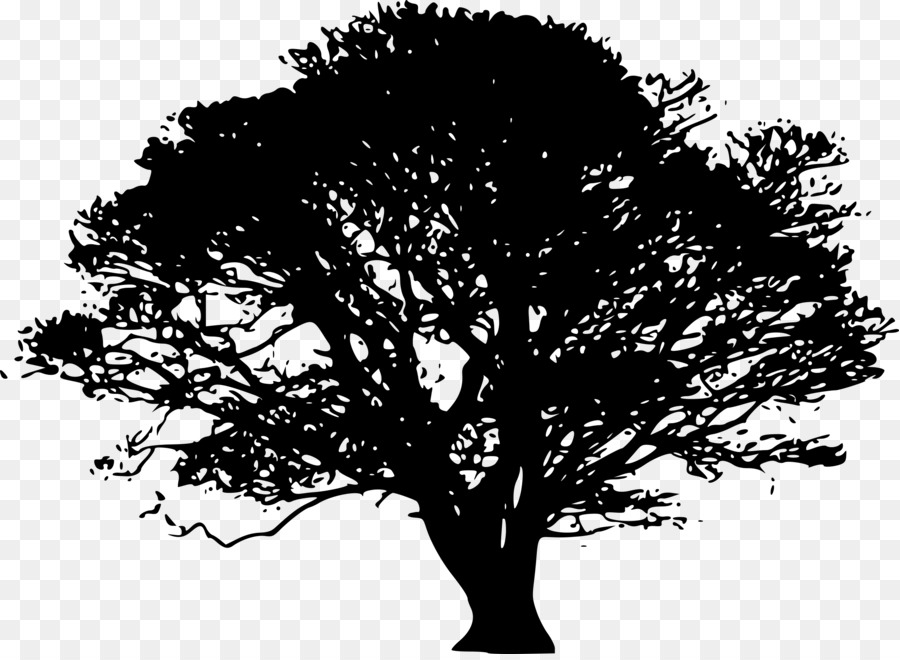 Tree northern red oak. Cemetery clipart transparent