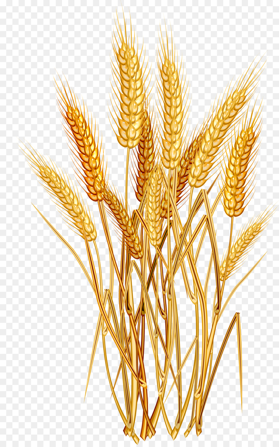 Common wheat ear clip. Cereal clipart cereal grain