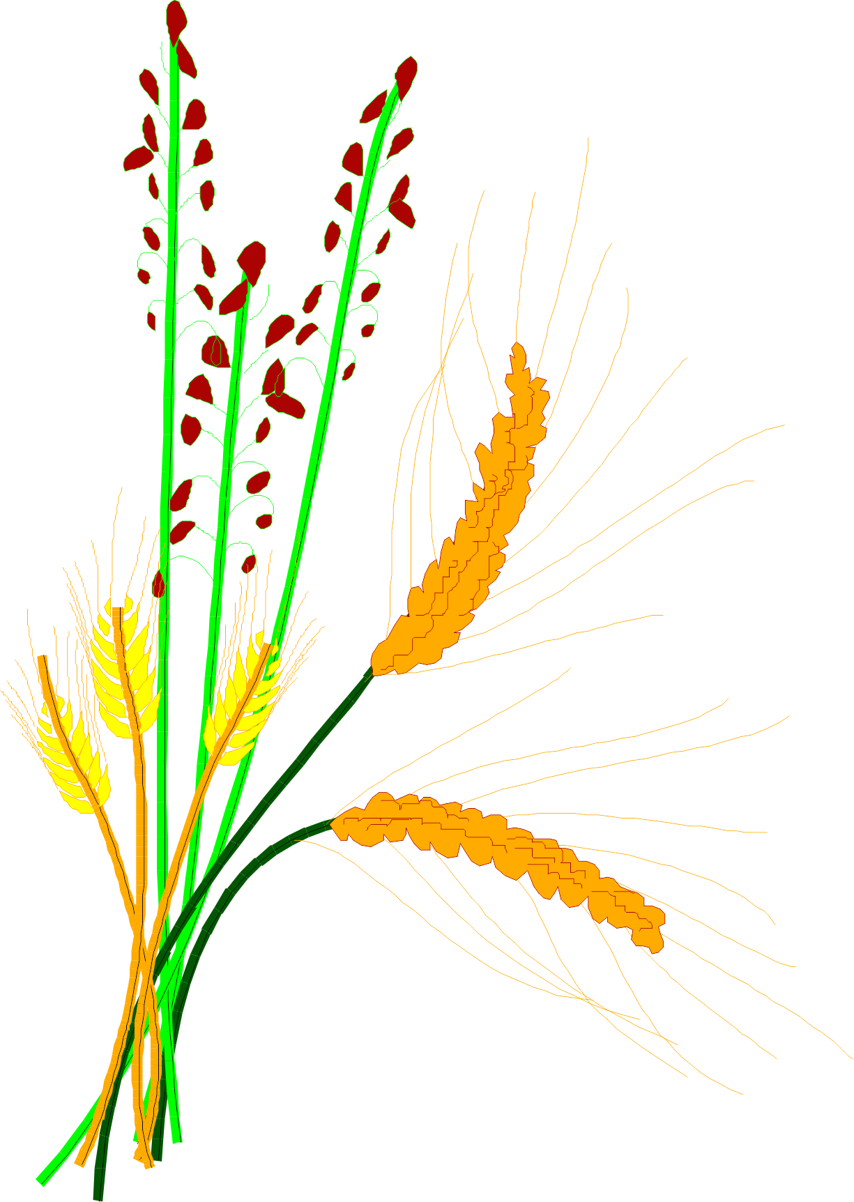 Grain clip art barley. Cereal clipart rice plant