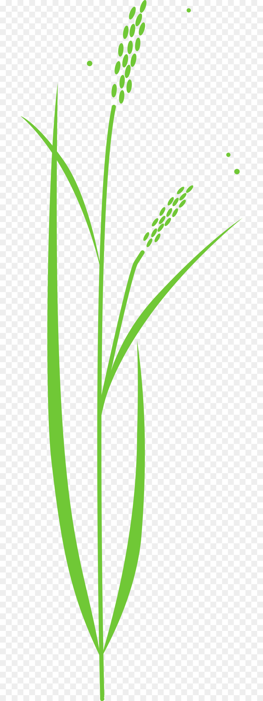 Clip art transprent png. Cereal clipart rice plant