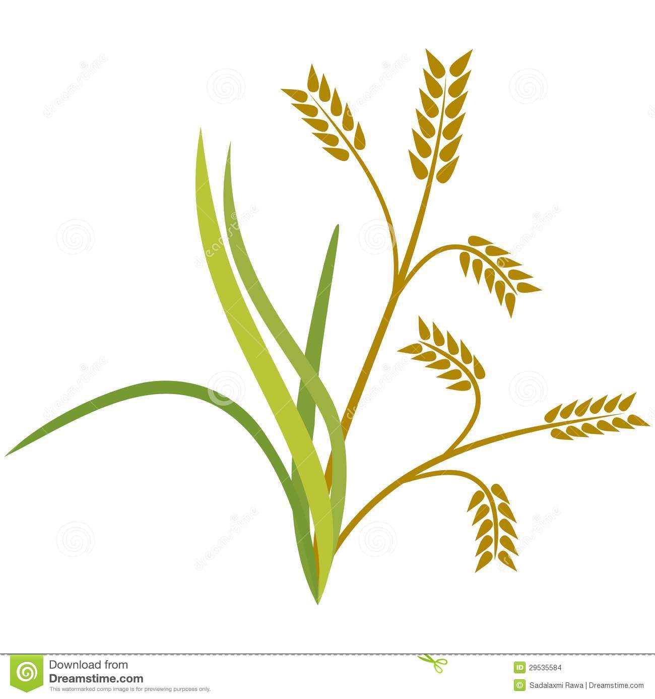Cereal clipart rice plant.  collection of tree